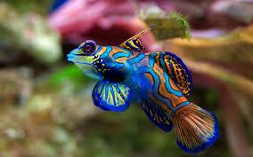 Is a Saltwater Aquarium or Freshwater Aquarium Best for your Home?