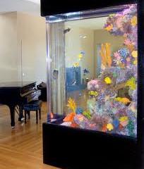 Saltwater Aquarium, Saltwater Aquarium Fish, Coral & Reefs