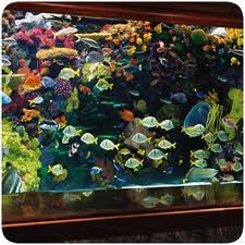 Bring In An Aquarium Builder To Custom Build Your Tank
