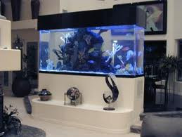 Before buying a custom fish tank