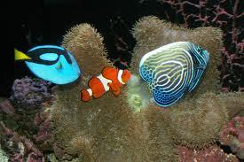 Finding Exotic, Saltwater Aquarium Fish in San Antonio
