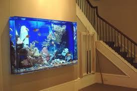 Why Choose Fresh Water Aquariums