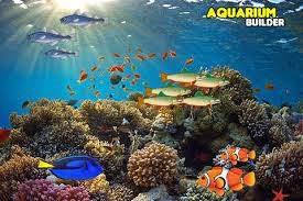 Things to Consider When Selecting an Aquarium Builder