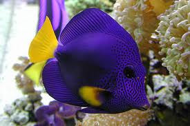 What To Look For In An Aquarium Service Company