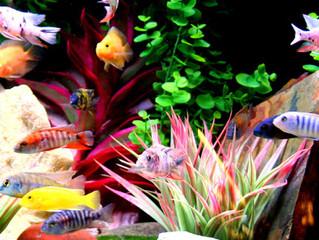 Quality Aquariums in San Antonio