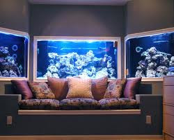 Eye Catching Custom Aquarium In San Antonio