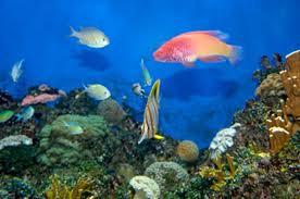 Awesome Custom Aquariums San Antonio Area