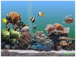 Selecting the Right Saltwater Aquarium