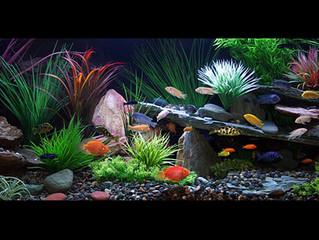Professional Aquarium Maintenance Will Make Or Break The Life Of Your Tank