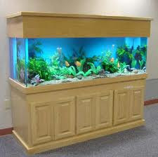 Fresh Water Aquariums To Liven Your Life