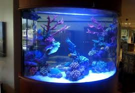 Aquarium Builders Take Pride In What They Do