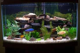 The Top 3 Reasons to Choose Freshwater Aquariums