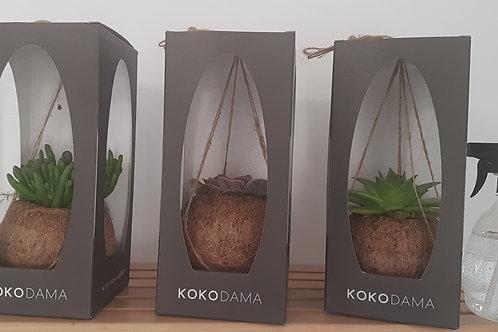 Hanging Kokodama Succulent