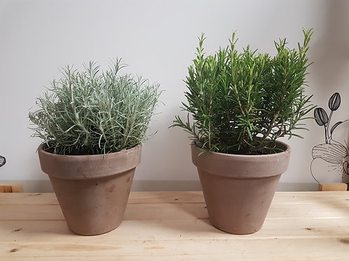 Potted Garden Herbs  ( 2 per order ) strong quality plants
