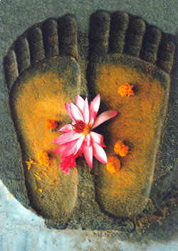 Reflexology & Thai Foot Massage