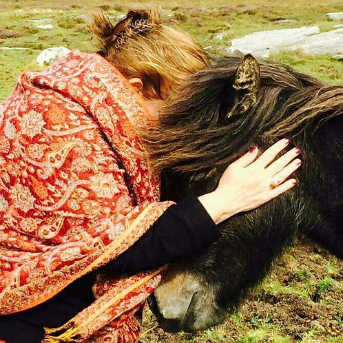 Reiki with animals ~ info and talk