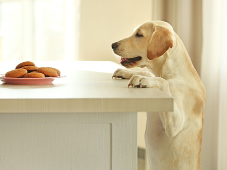 Counter-surfing -- Why Do They Do It and How Can We Stop It?