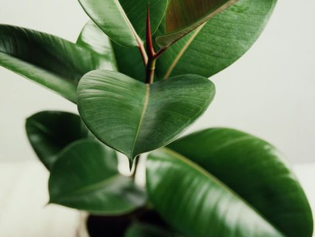 Bring The Outdoors In With These 3 Easy Care Indoor Plants