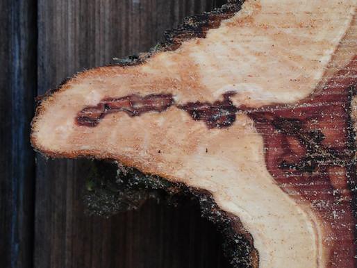 Heimisches Holz aus Bayern!