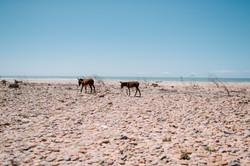 Anoukfotografeert Marokko reis-407