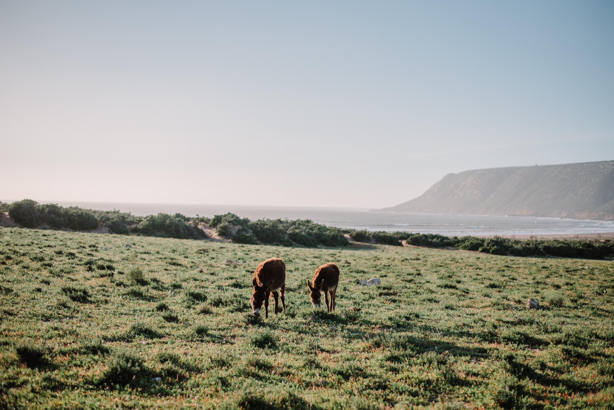 Anoukfotografeert Marokko reis-442