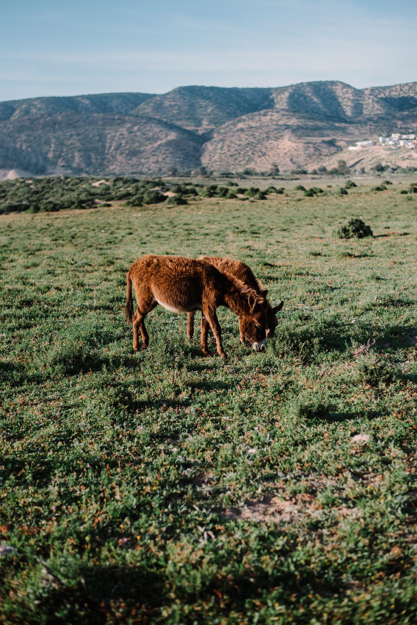 Anoukfotografeert Marokko reis-440