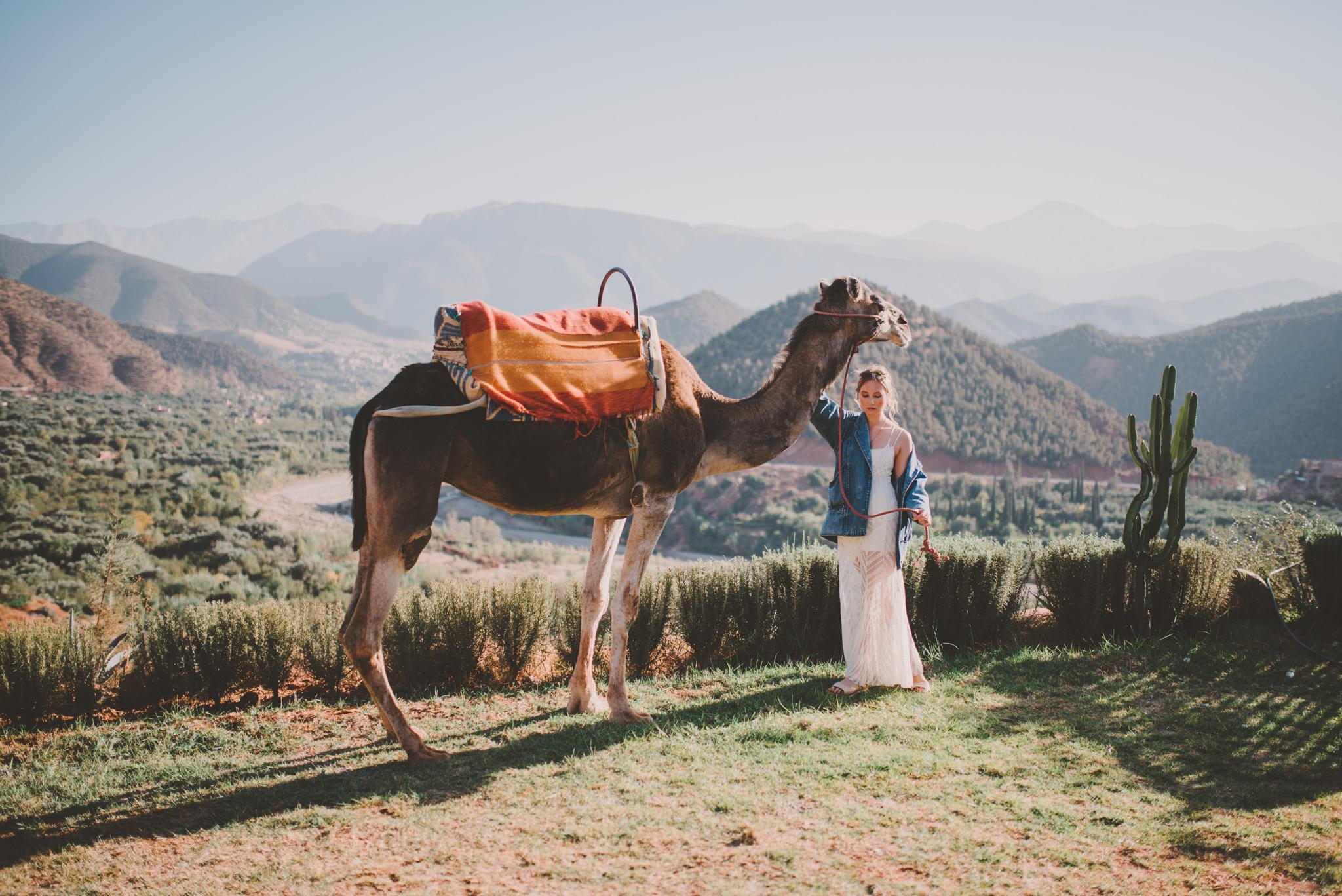 editorial camels-1