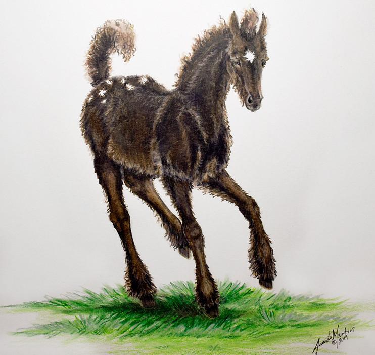 'Little Foal' #1