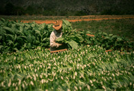 Kuba (85).jpg