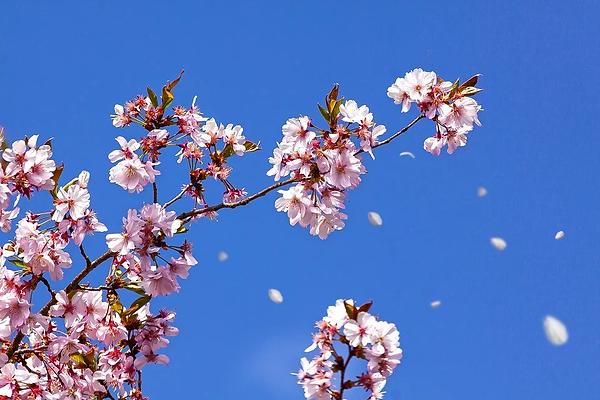 spring-4110126_960_720.webp