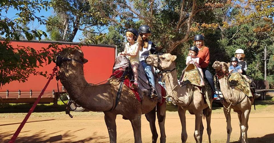 Kalbarri_Calamunda_Camels (11)