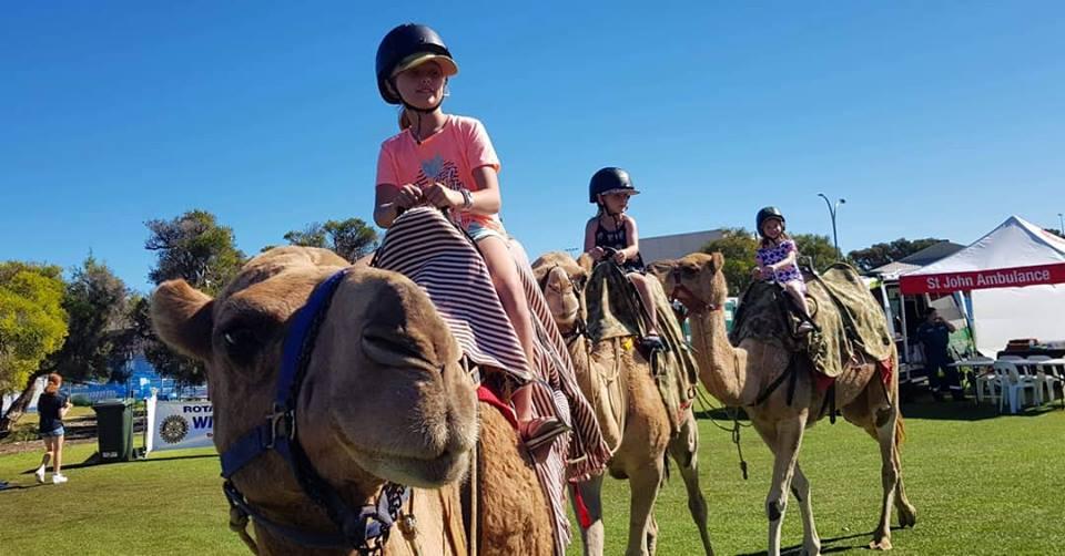 Kalbarri_Calamunda_Camels (12)