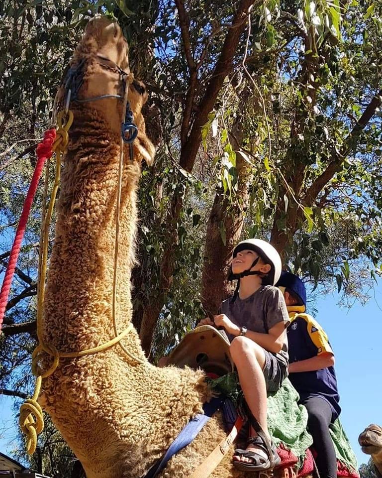Kalbarri_Calamunda_Camels (6)