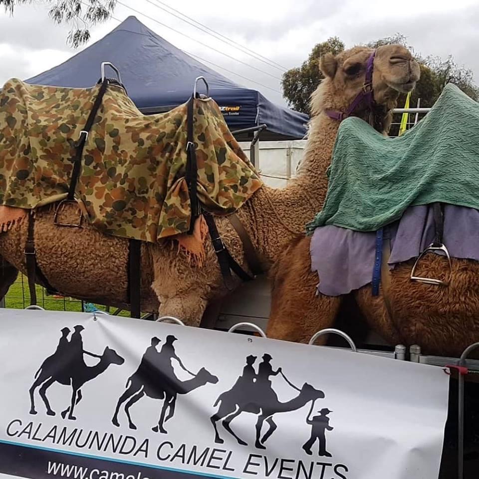 Kalbarri_Calamunda_Camels (2)