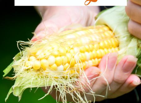 USA: Sensory Corn Shucking Activity