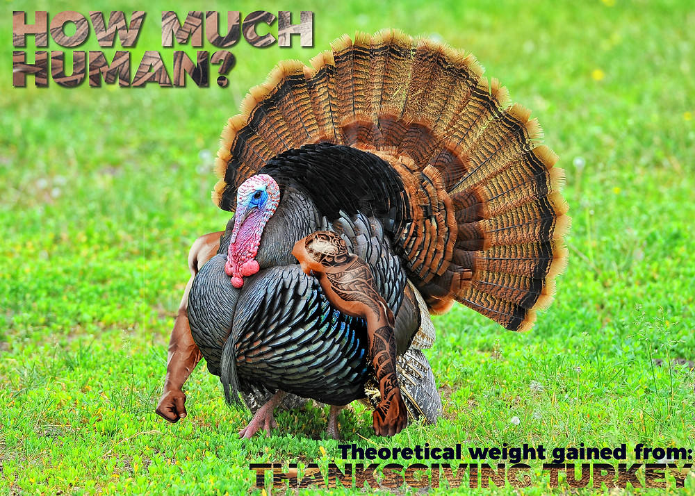 The title image of a turkey with hunky muscle arms, tainted with tribal tattoo sleeves, undoubtedly a tribe to which the spray tan host does not belong nor does he know its name.