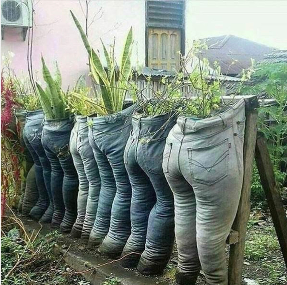 A row of human denim jeans hardened with concrete and used as outdoor planters. Proof that not all humans are ready for space travel...