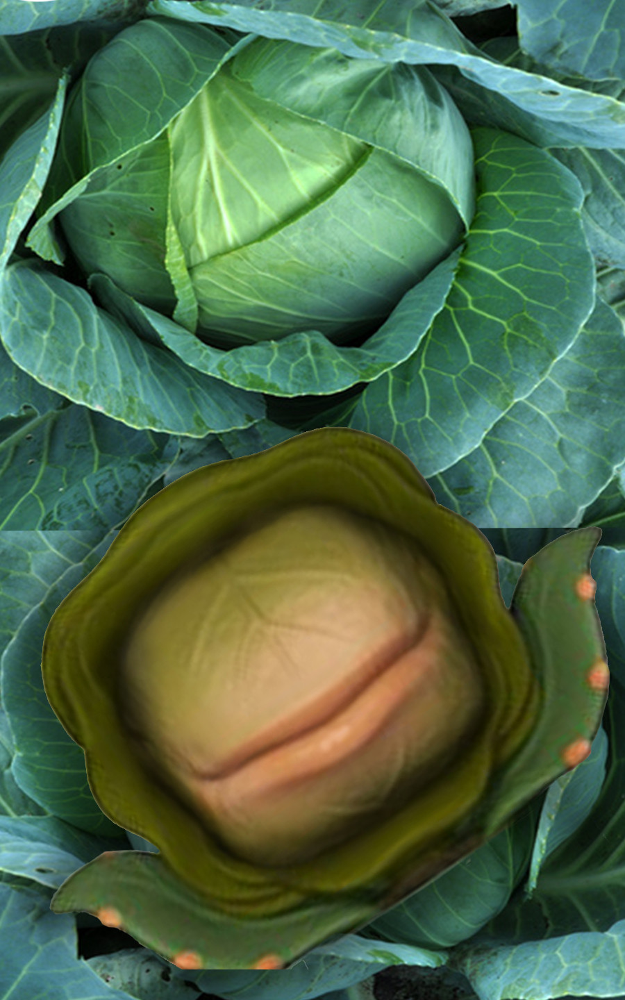 Side-by-side images of a head of cabbage and Audrey 2 from Little Shop of Horrors. They look identical.