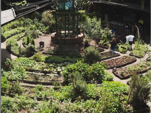Wrangled: Urban Gardening