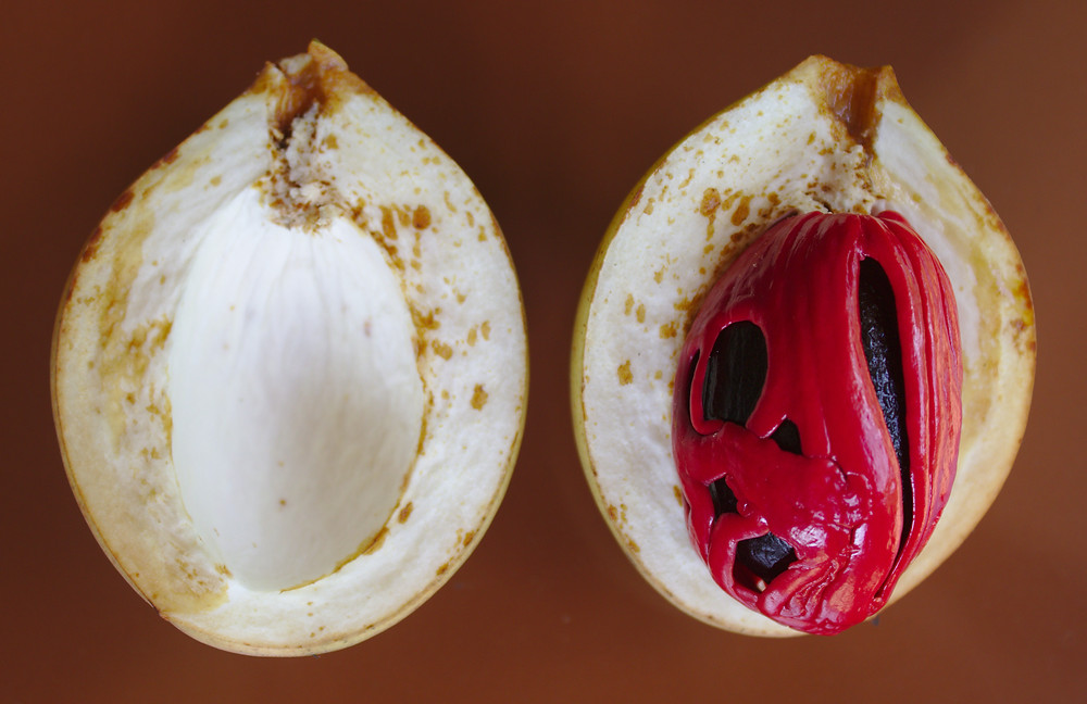 Nutmeg looks like Carrie at Prom after the whole pig's blood incident, but inside of a thick, white shell.