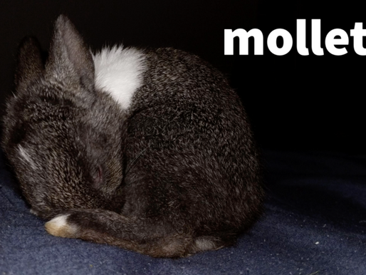 MOLLETTE: A TRIBUTE TO MY BUNNY FOR HER SECOND BIRTHDAY