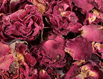 Rosenblüten mit Kelch.jpg