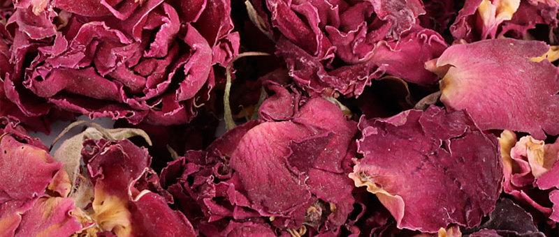 Rosenblüten mit Kelch