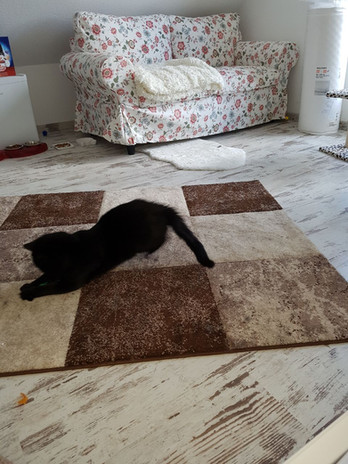 Katzenzimmer Mäusespeck