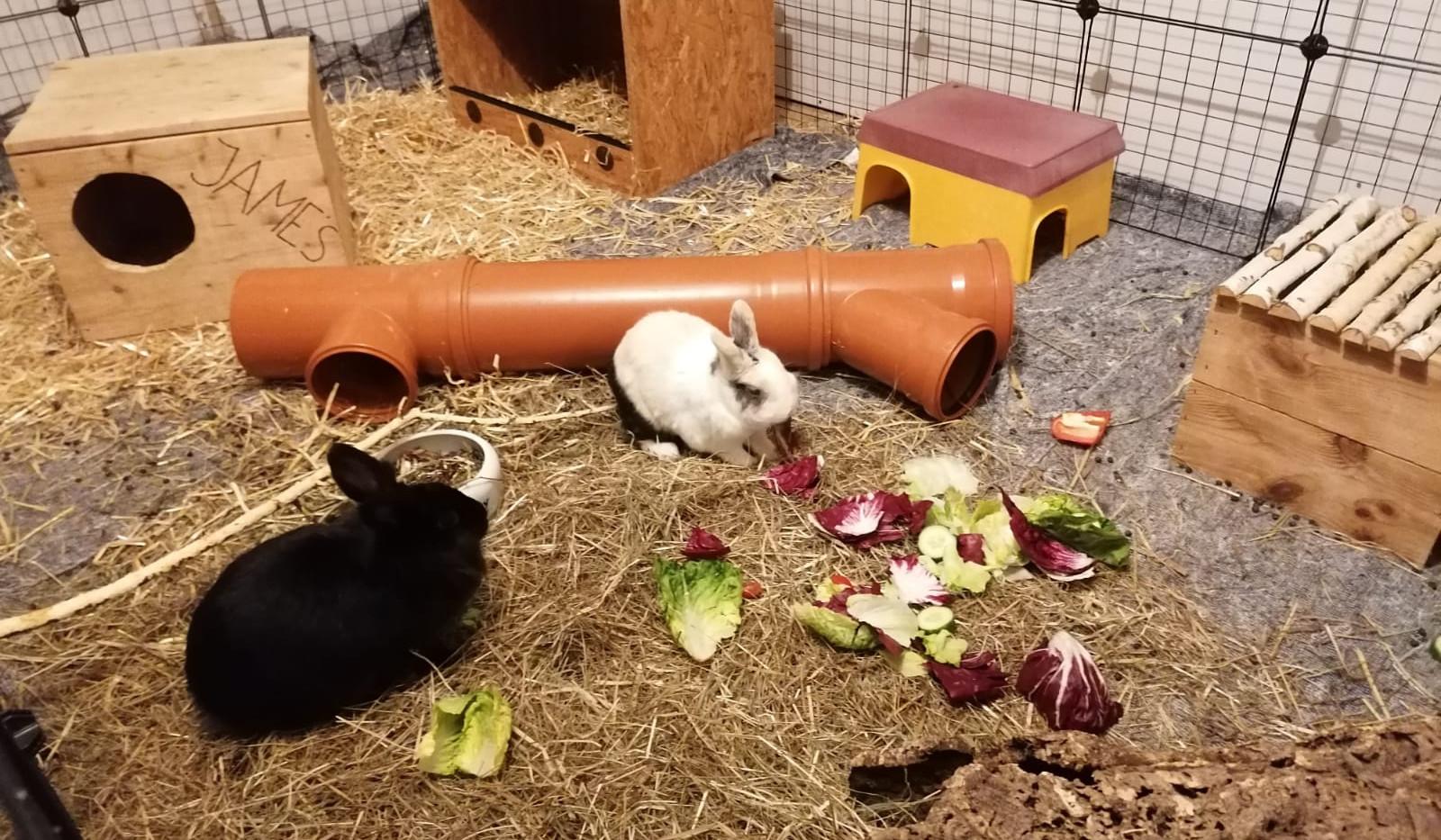 kaninchen innengehege neuss.jpg