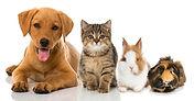 Logo Tierbetreuung.jpg