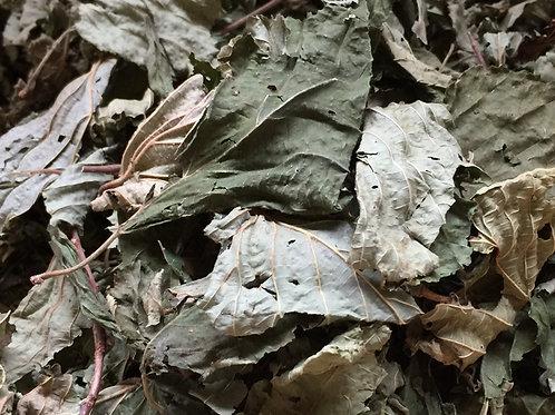 Maulbeerblätter | Fieber und Erkältungen