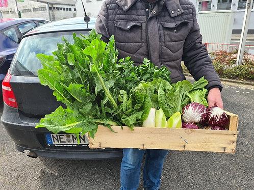 Mittelgroße Salat- und Kräuterkiste   M