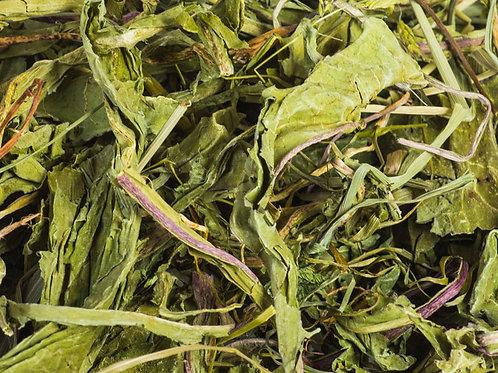 Löwenzahnkraut mit Blättern