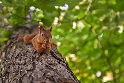 Eichhörnchen Startseite.jpg